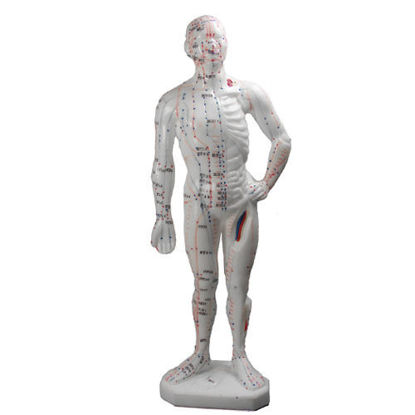 Picture of Human Body Model, 10 (26cm)