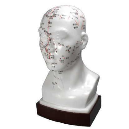 Picture of Head Model 8 (20cm)