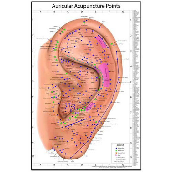 Picture of The World's Best Auriculotherapy Wall Chart