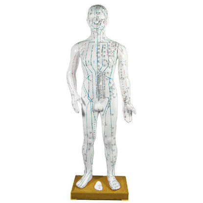 """Picture of Human Male Composite Body Model 25"""""""