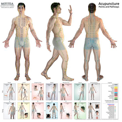 Picture of The Ultimate Acupuncture Wall Chart